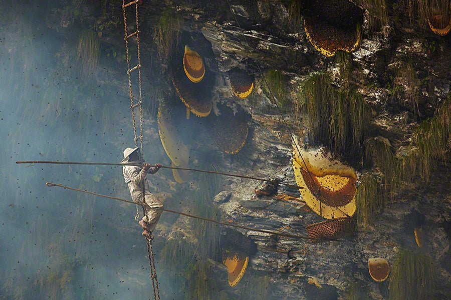 Stunning photos show the ancient tradition of honey hunting in Nepal