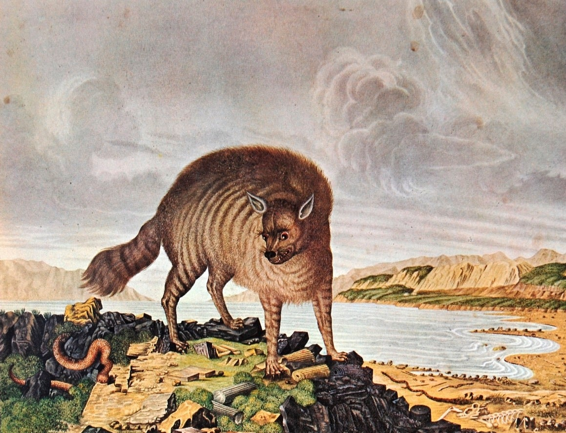 How Europeans Imagined Exotic Animals Centuries Ago, Based on Hearsay