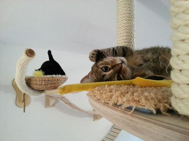 Bored Cats Find Sense of Purpose in Personalized Cat Playgrounds