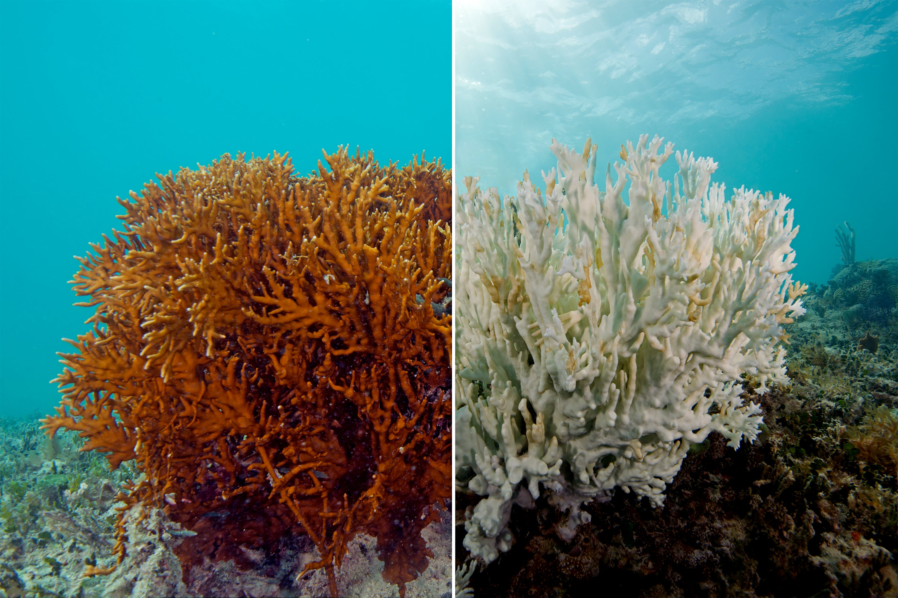 This is What a Mass Die-off of Earth's Coral Reefs Looks Like