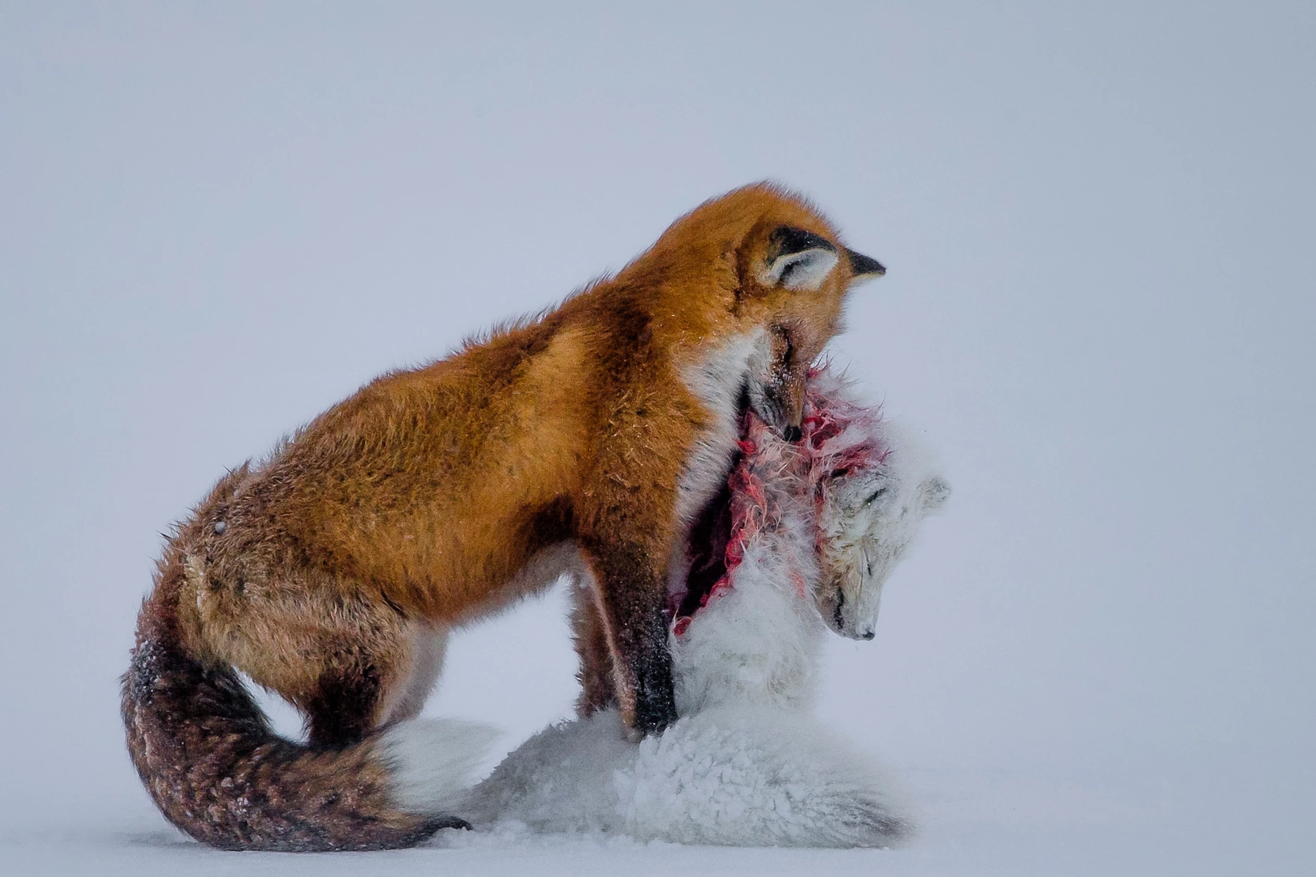 These Are The Best Wildlife Photographs Of 2015