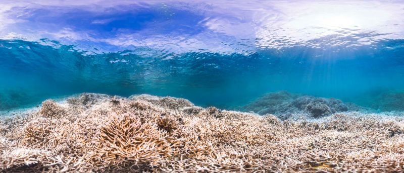 Your Sunscreen Is Killing Earth's Coral Reefs