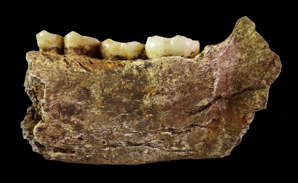 The Controversy over Homo Naledi Is Actually A Good Thing