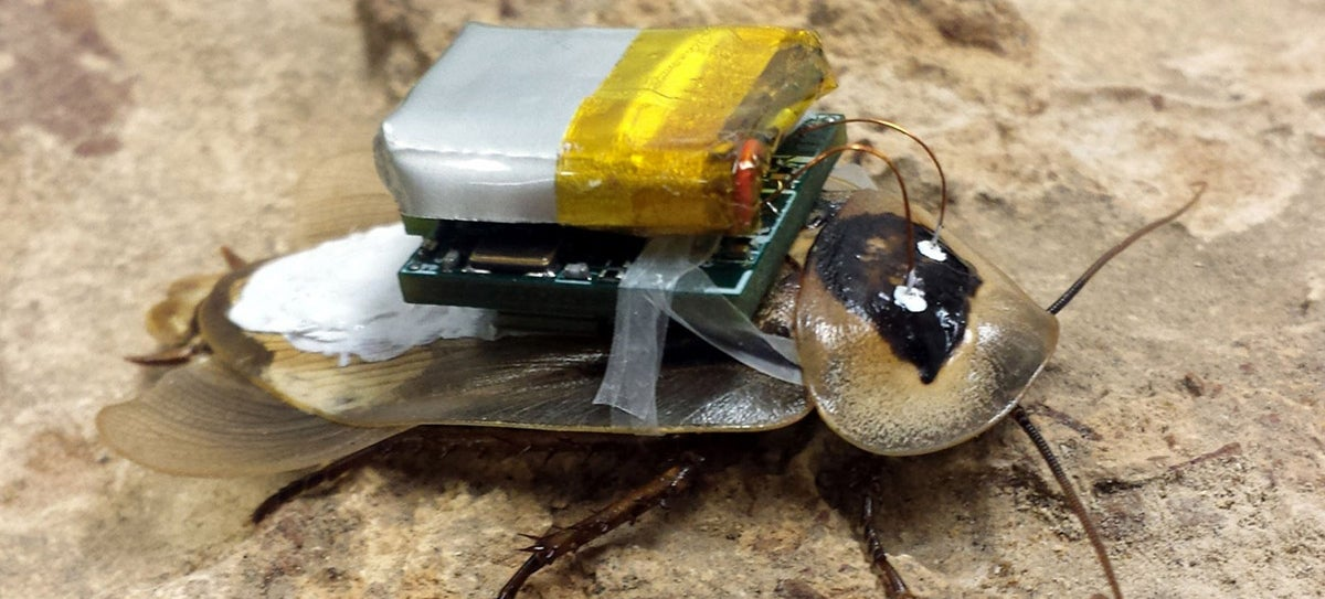 This Cyborg Cockroach's Nervous System Is Hardwired for Remote Control