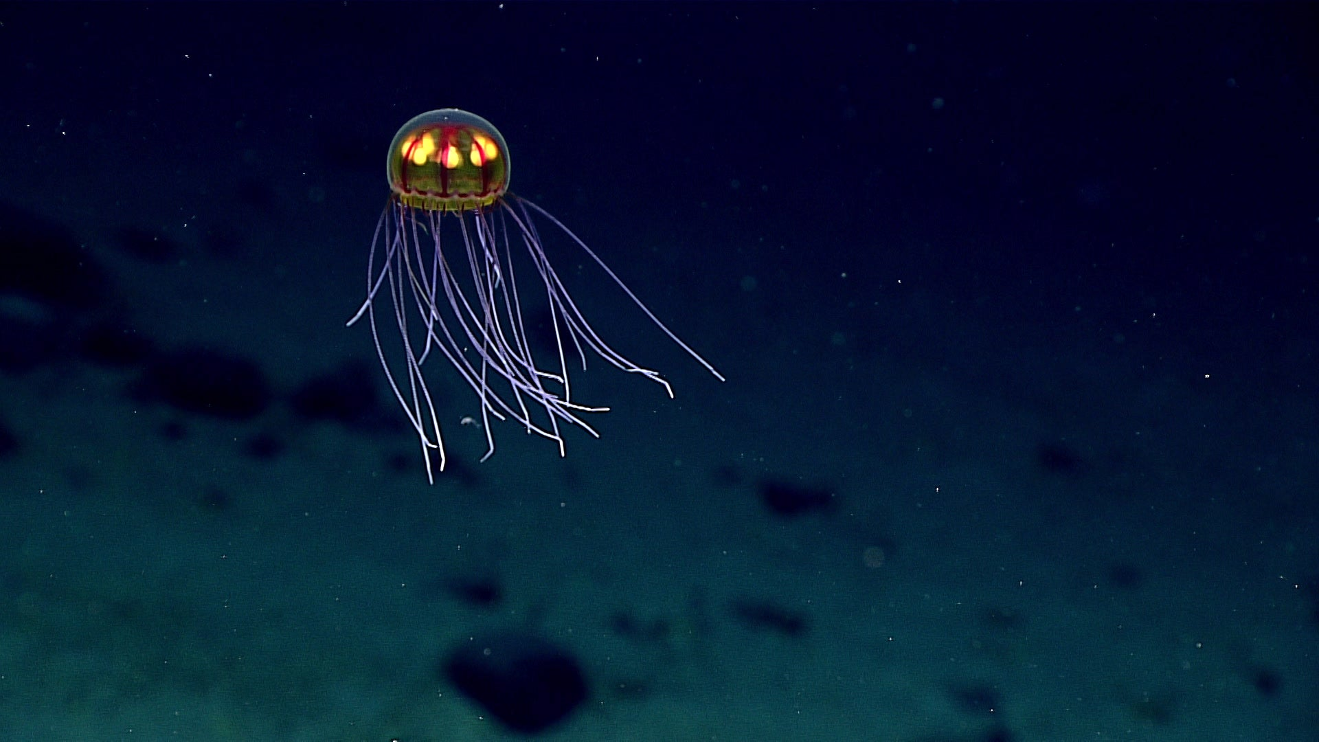 Mariana Trench Live Stream Reveals Some Seriously Gnarly Creatures
