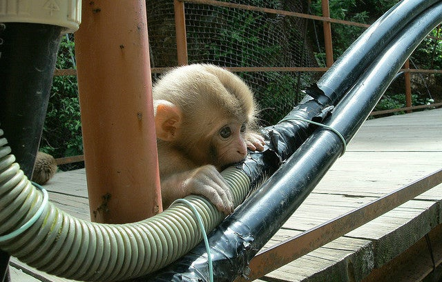 Monkeys Can't Stop Eating India's Delicious Fibre Optic Cables