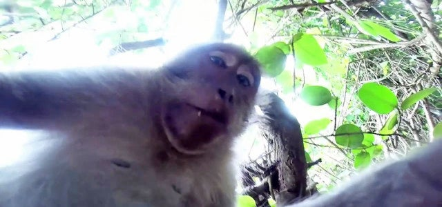 Hilarious Monkey Steals A GoPro Camera And Takes A Selfie