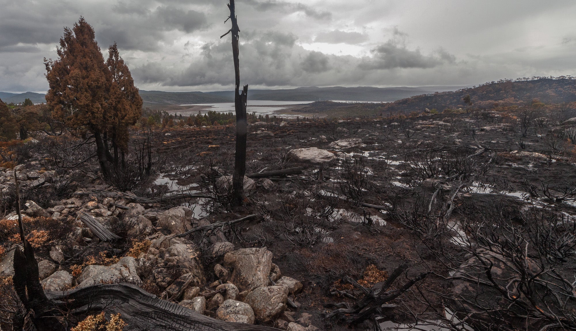 A Global Tragedy Is Unfolding In Tasmania