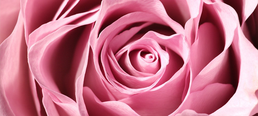 New Stretchable Circuitry Is Inspired by Rose Petals