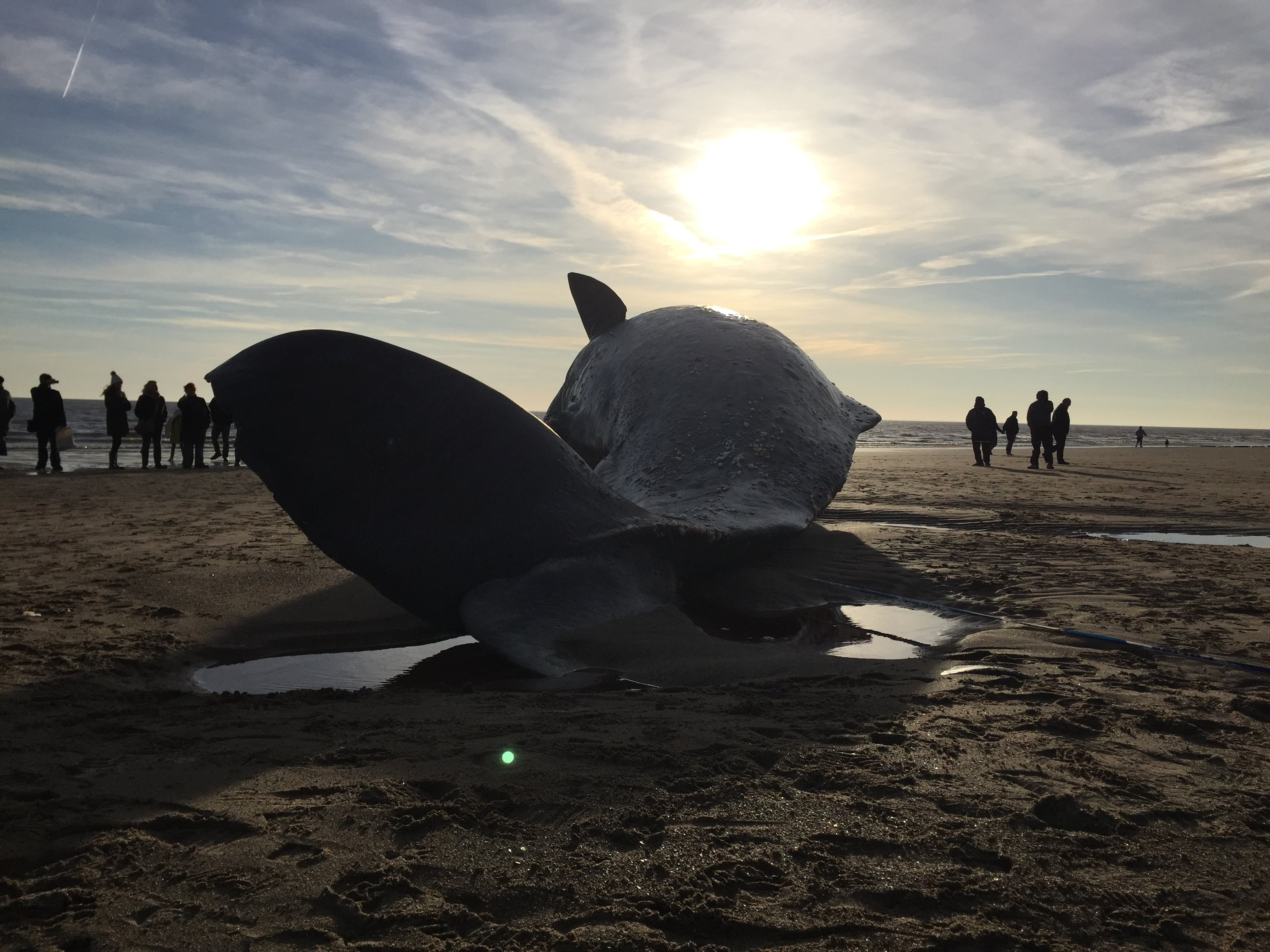 There May Be a Silver Lining to Those Dead Whales On UK Beaches