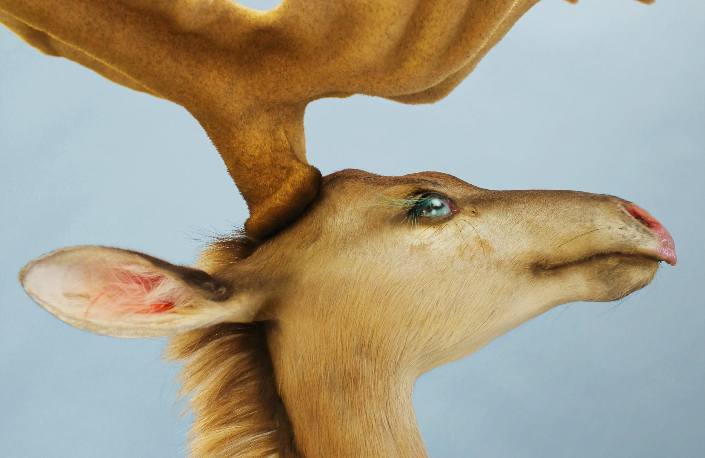Welcome To The Future Zoo, Home To A Menagerie Of Creepy Mutants