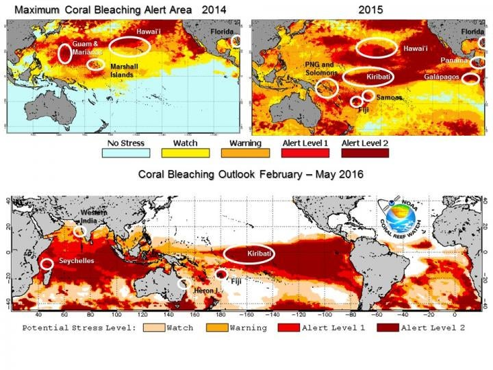 El Niño Is Killing Earth's Coral Reefs