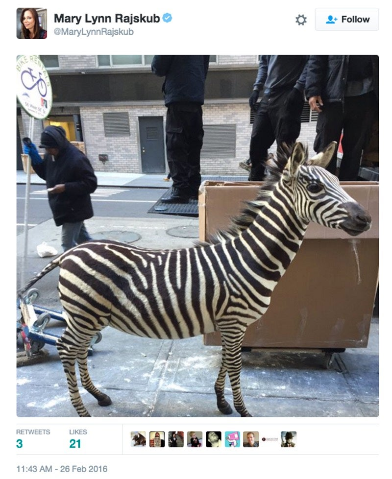 That Loose Zebra In New York Is Fake Because Everything On The Internet Is Fake