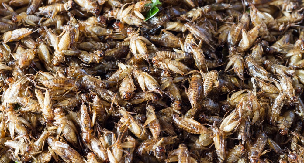 Crickets Aren't The Superfood They're Cracked Up To Be