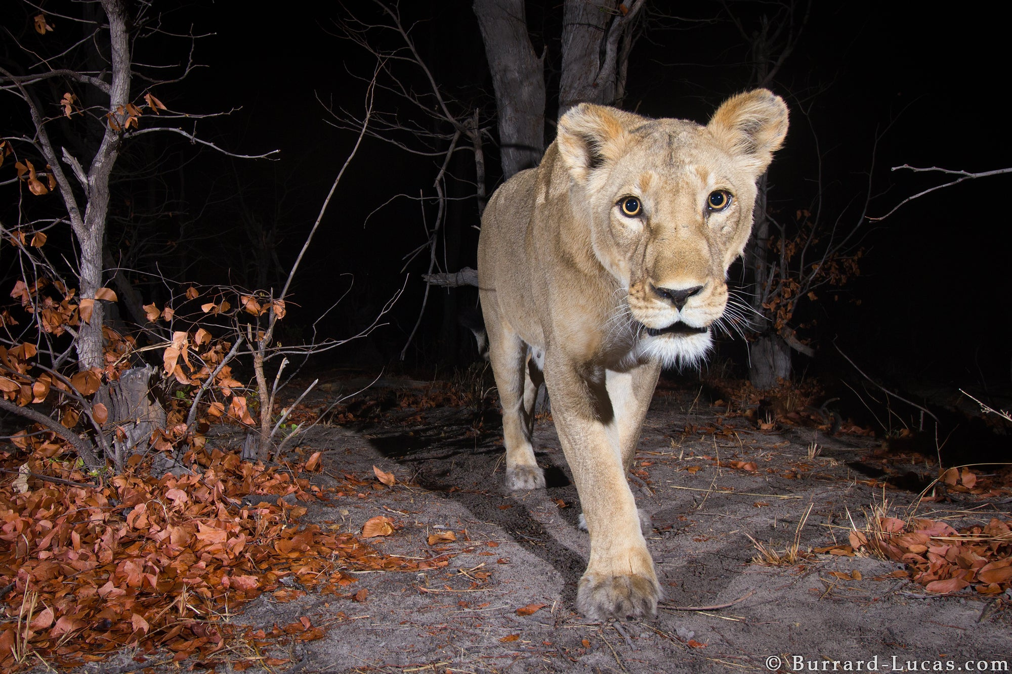 Sneaky Camera Traps Capture Stunning Images of Namibian Wildlife