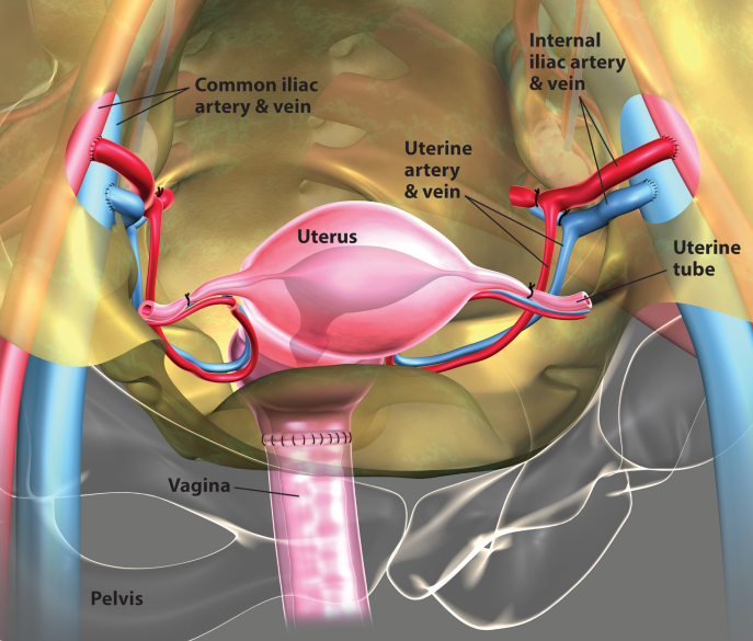 First Uterus Transplant in US Offers Hope to Thousands of Infertile Women