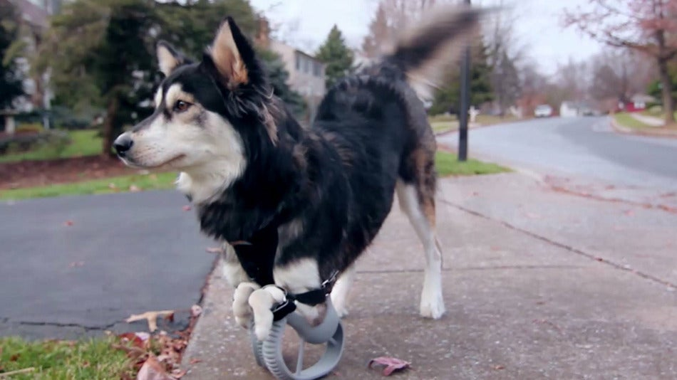 Derby, the Adorable Cybernetic Dog, Just Got a Major Upgrade