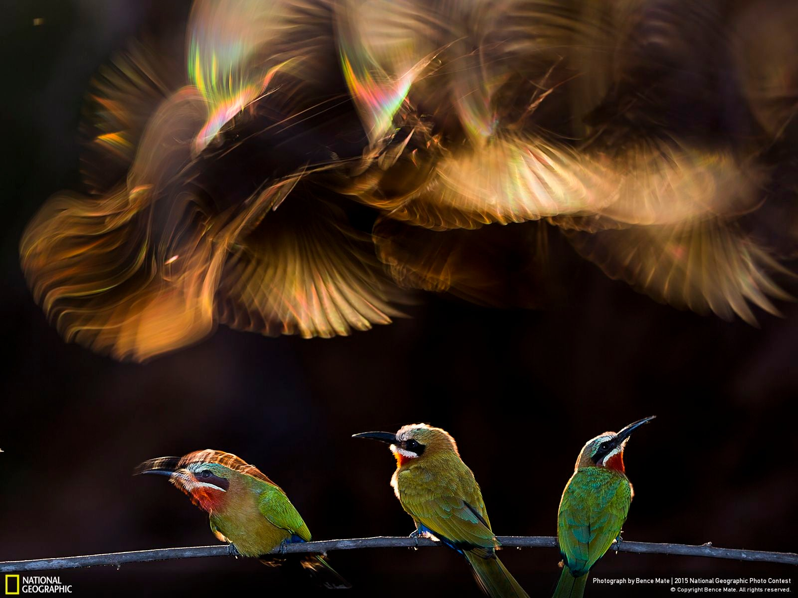 The Coolest Images From National Geographic's 2015 Photo Contest