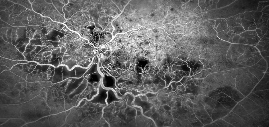 The Best Biomedical Images of the Year Reveal the True Beauty of Biology