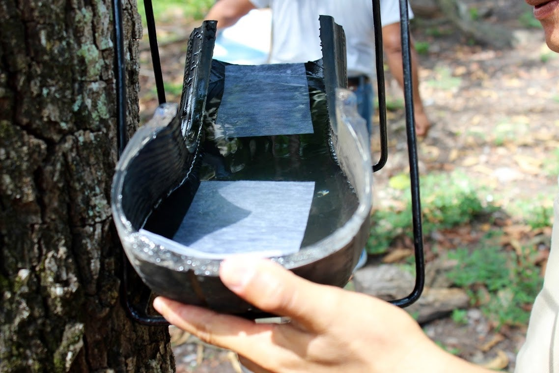 This Low-Tech Trap For Killing Mosquito Eggs Is Brilliant