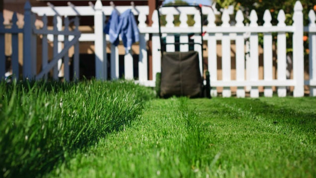 Maintain Your Kerb Appeal with These Yard Maintenance Tips