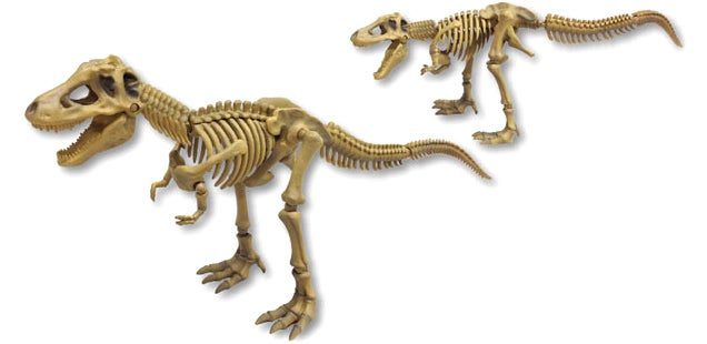 Have Your Own Night At The Museum With Fully Poseable Dino Skeletons