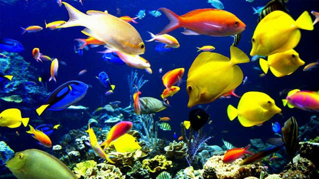 Dive Under the Sea with These Ocean Wallpapers