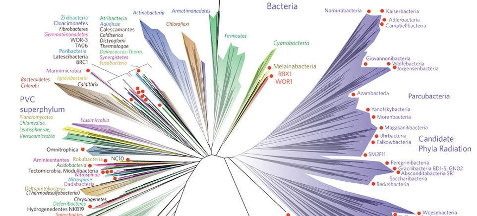 Scientists Have Published A New Tree Of Life
