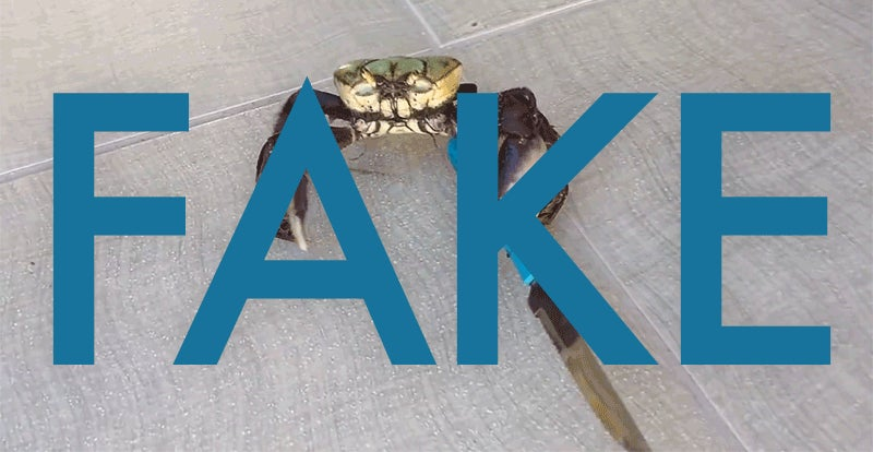 That Knife-Wielding Crab Video Is A Hoax
