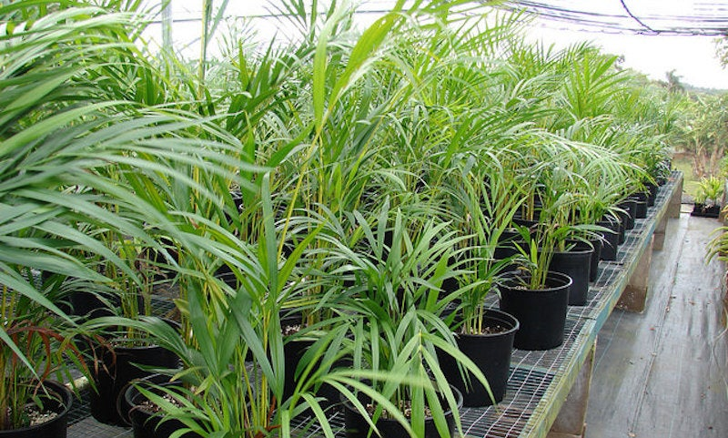 The best low maintenance pet friendly houseplants lifehacker australia - Low maintenance indoor plant ...