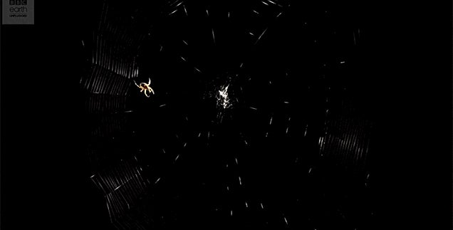 Watch a Spider Spin Its Intricate Web and Then Use It to Catch Prey