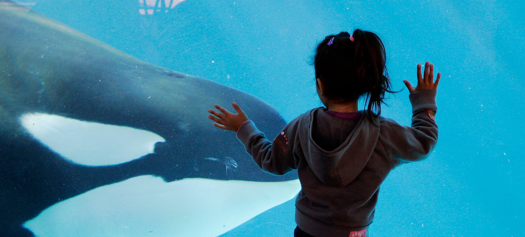 SeaWorld Will Finally Stop Using Killer Whales... After Just a Few More Years of Exploitation