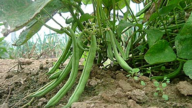 best vegetables to grow for beginners 3
