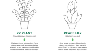 Illustration for article titled Why You Keep Killing Your Plants and What to Do About It