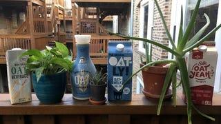OatMG! A taste test of grocery store oat milks