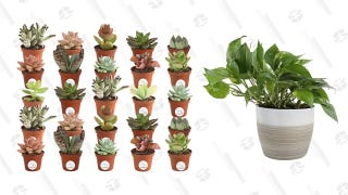 Put Some Green In Your Home When You Save 20% On Live House Plants