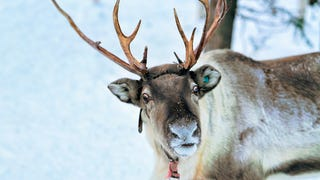 Sycamore brewing Charlotte in trouble for Christmas Cookie Winter Ale can reindeer