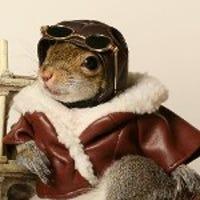 sugarbushsquirrel