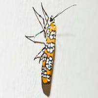 lynxonyx