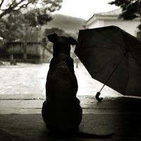 raindogtoo
