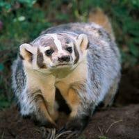 BadgerSpeed