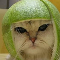 katmelon