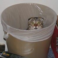 GarbageCat