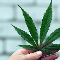 marijuananews