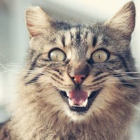 catringail