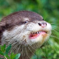 snowflakeotter
