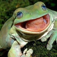 thefrog1394
