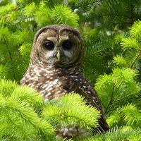 owlislost