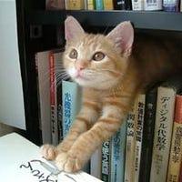 librarianofcats