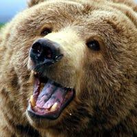bearhands63